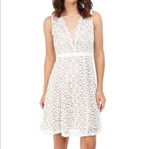 Adrianna Papell v inset lace fit & flare dress